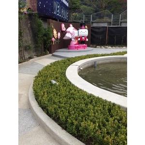 景觀魚池-桂林園藝