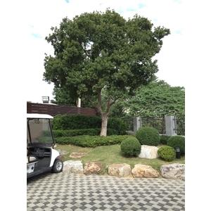 景觀樹木養護-桂林園藝