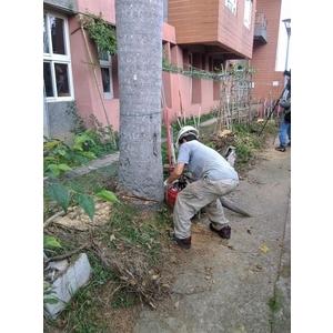 樹木修剪、景觀綠化工程-兆美還淨工程有限公司