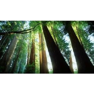 天然-德屋風格木皮板-彰化