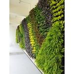 景觀綠牆設計