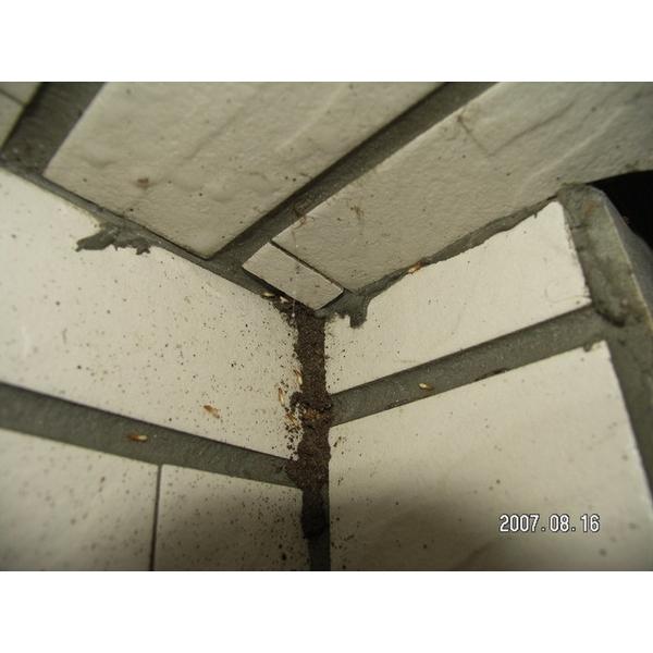 除白蟻-外牆瓷磚