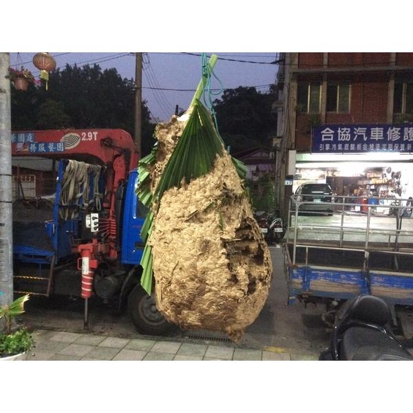 蜂巢摘除-剪刀倫園藝社-台北