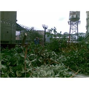 樹木修剪、花圃整理