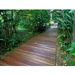 小森林木棧道