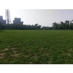 興達發電廠足球場