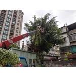 樹木專業修剪