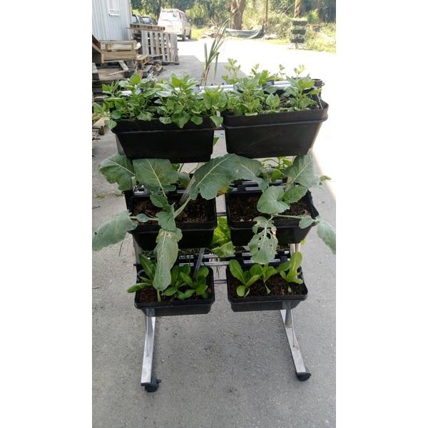城市農田立體有機植栽