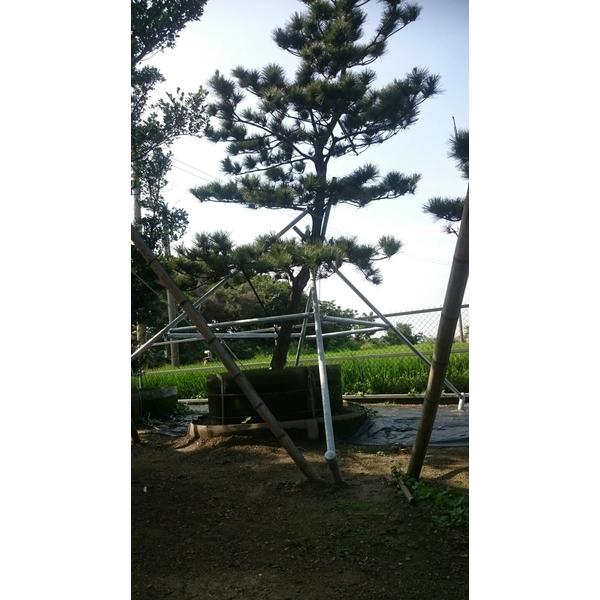 景觀樹用支架-裕軒沖壓工業社-彰化