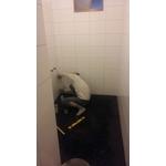 廁所整修工程-pic3