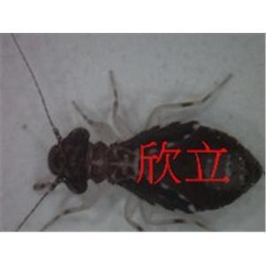 囓蟲-消毒服務