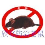 老鼠|抓鼠|捕鼠|滅鼠