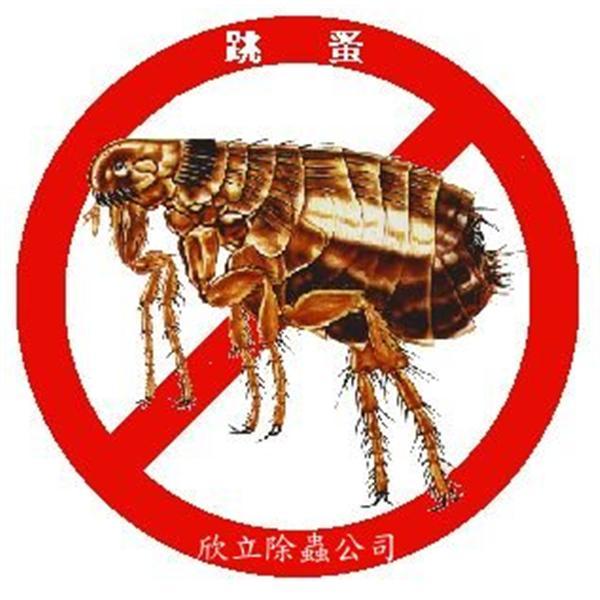 防治跳蚤| 殺跳蚤-欣立環保服務有限公司-台北