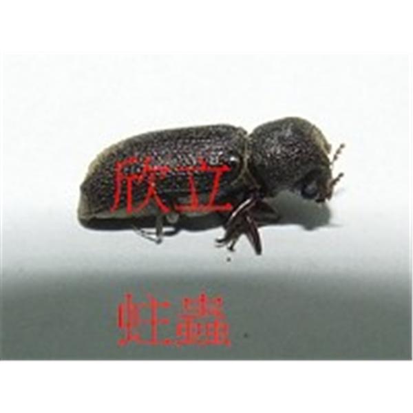 防治蛀蟲|木蠹蟲-欣立環保服務有限公司-台北