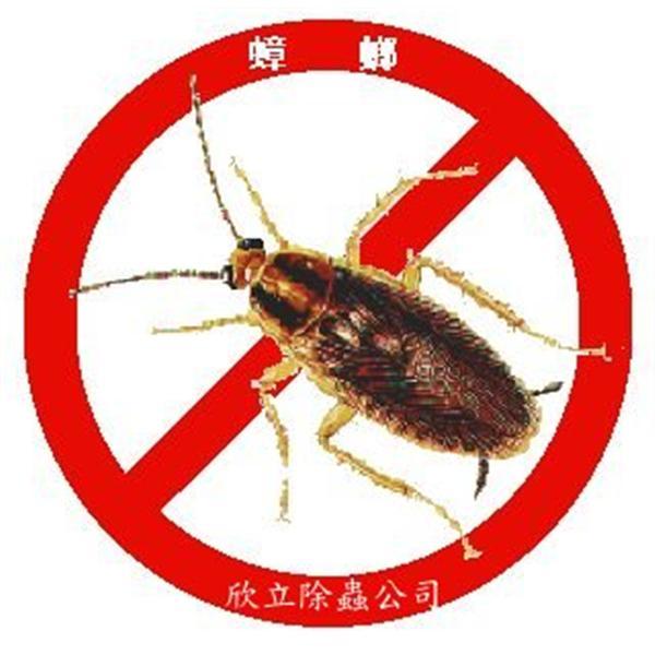 防治蟑螂| 殺蟑螂-欣立環保服務有限公司-台北