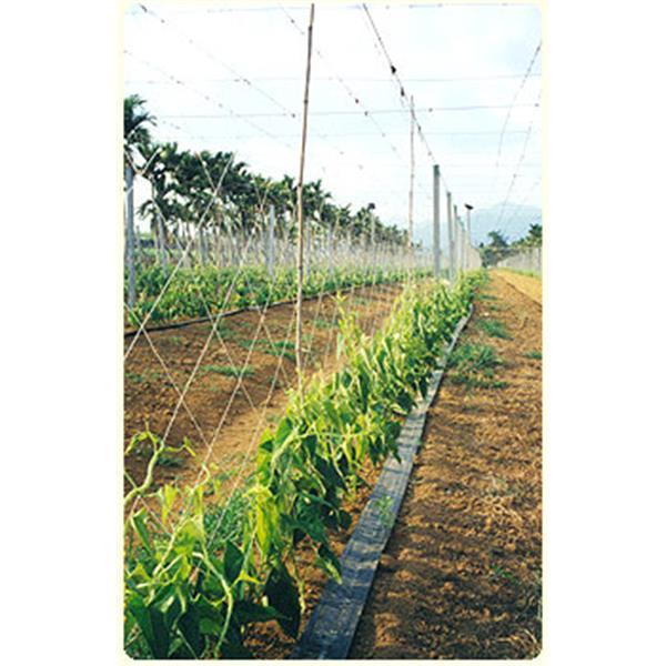 農業用網-小黃瓜網-欣隆製網股份有限公司-彰化
