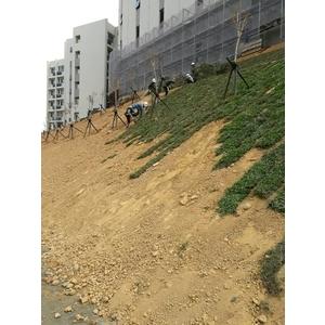 邊坡草皮綠化工程