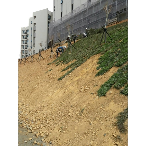 邊坡草皮綠化工程-永興園藝有限公司-雲林