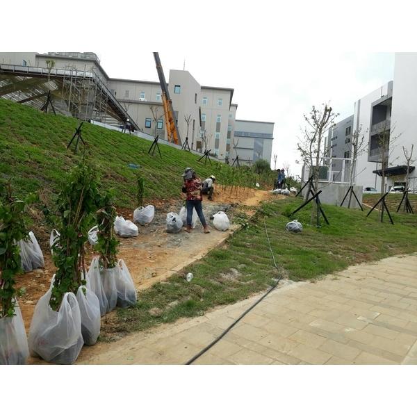 邊坡綠化工程-永興園藝有限公司-雲林