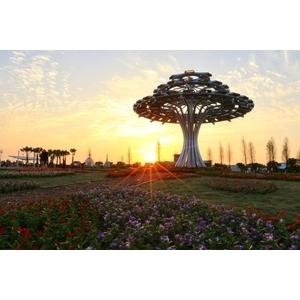 夕陽下的生命樹