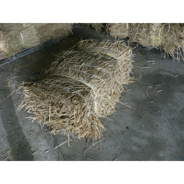 草皮-永旺草皮農場-台中